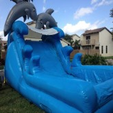 Dolphin Plunge Water Slide Rental Miami